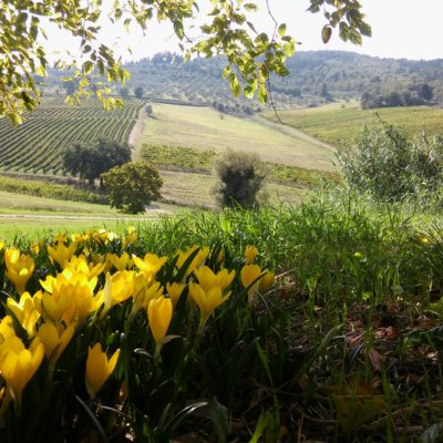 Agritourism in Greve in Chianti