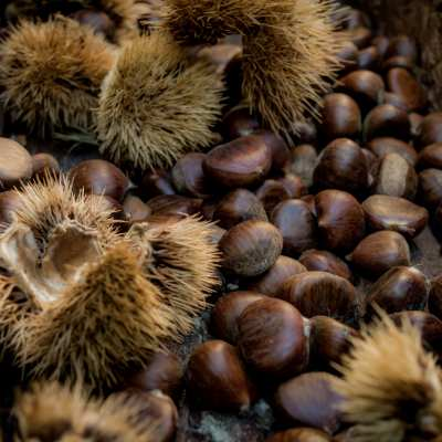 The chestnuts of Lunigiana