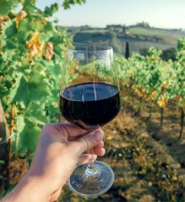 Brunello wine in Montalcino, Val d'Orcia