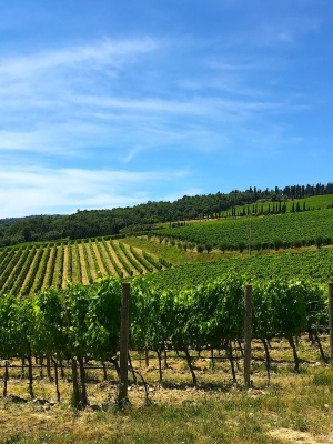 Vineyards of Chianti Classico