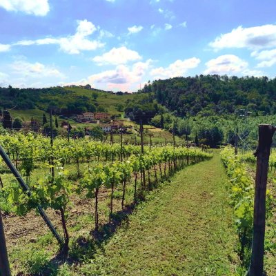 Vineyards in the Lucca valley of wine.