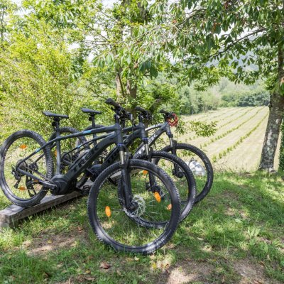 e-bike pedalata assistita