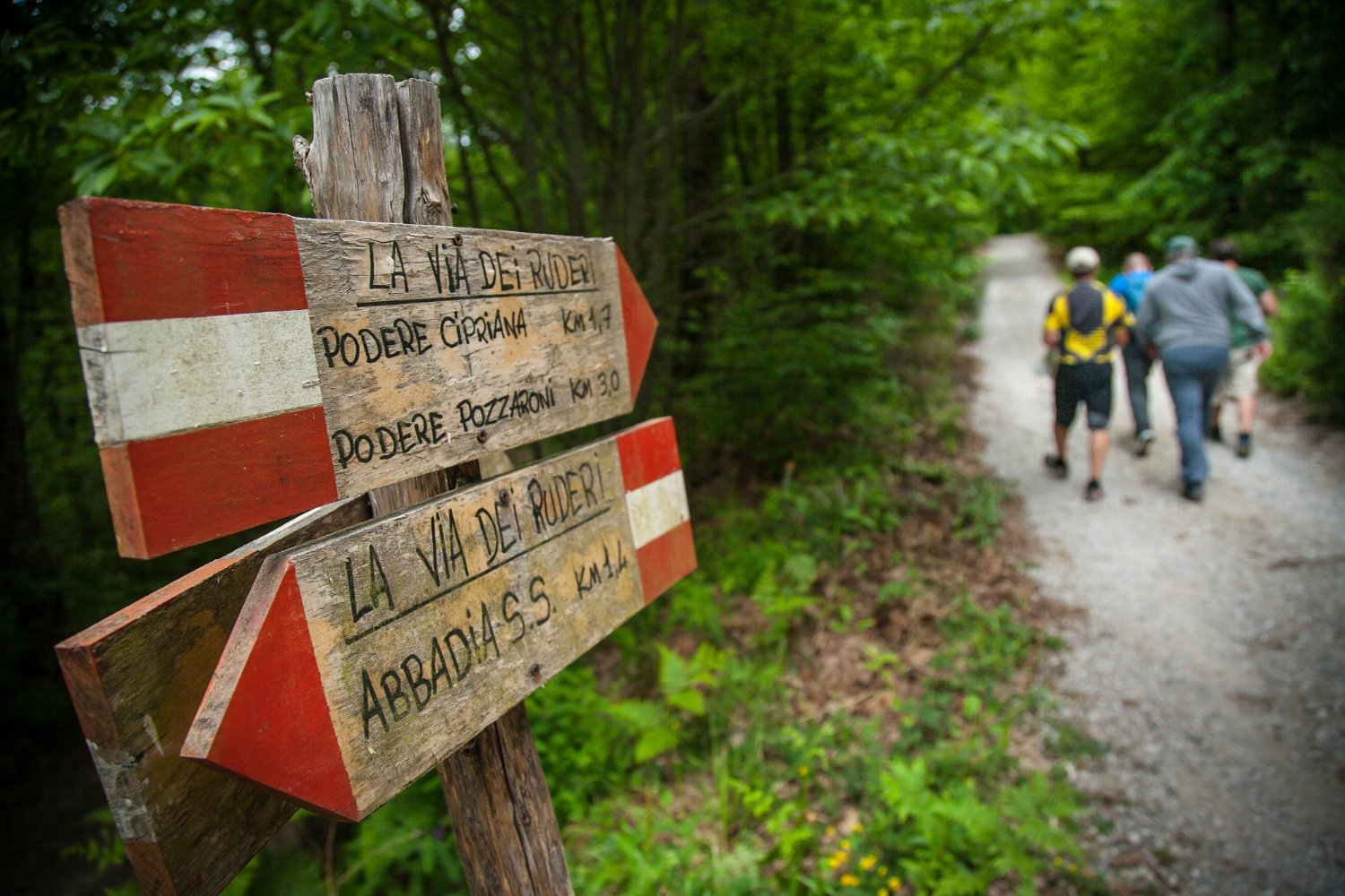 Trekking in the woods of Monte Amiata