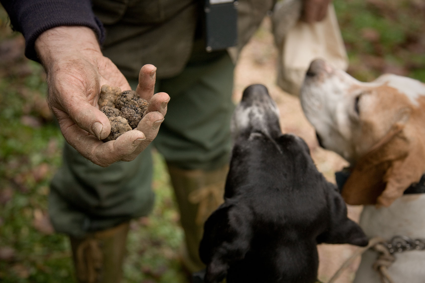 Truffle hunting in Tuscany with lunch and wine tasting | Visit Tuscany