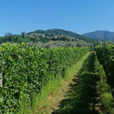 Hike and wine in Tuscany