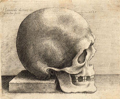 wenceslas_hollar_-_right_profile_of_a_skull.jpg