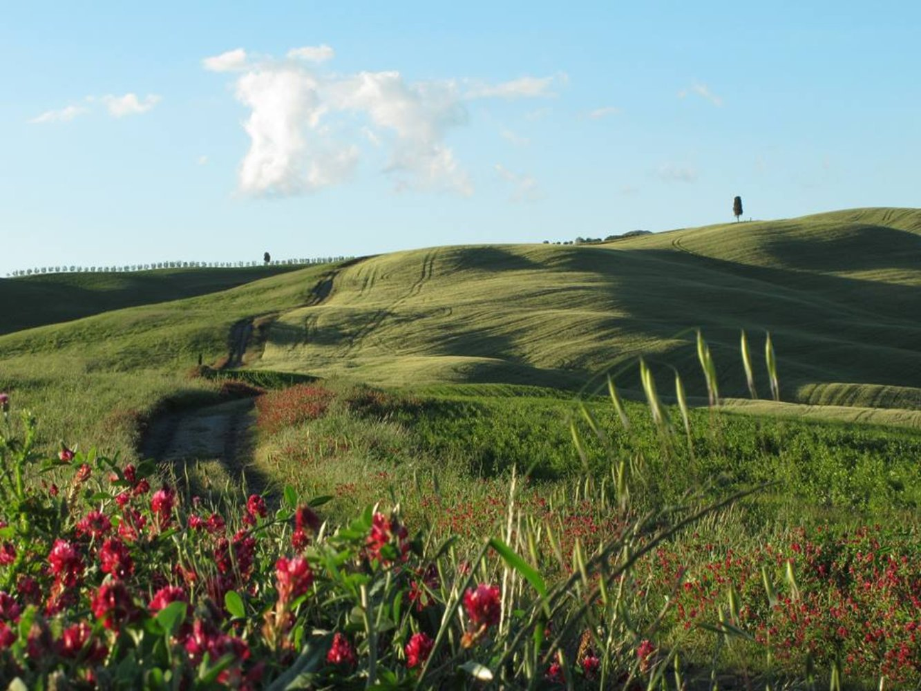 Along the Via Francigena in Val D'Orcia