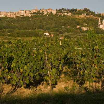 Montepulciano and its vineyards