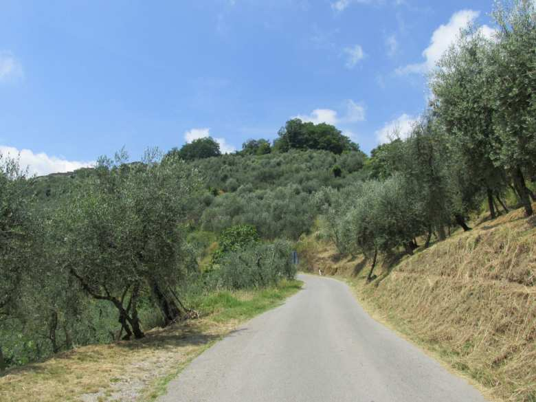 Pescia countryside