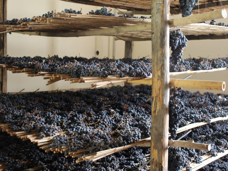 Drying grapes to make Vin Santo at Artimino estate