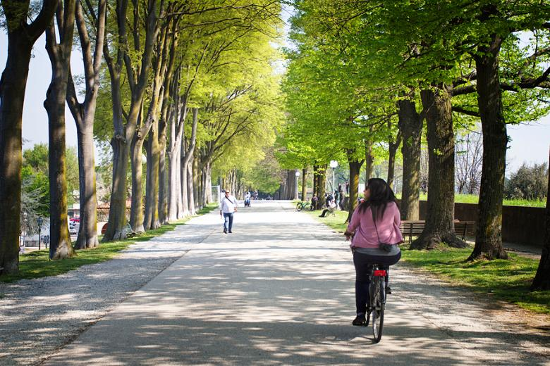 Biking along Lucca tree lined paths
