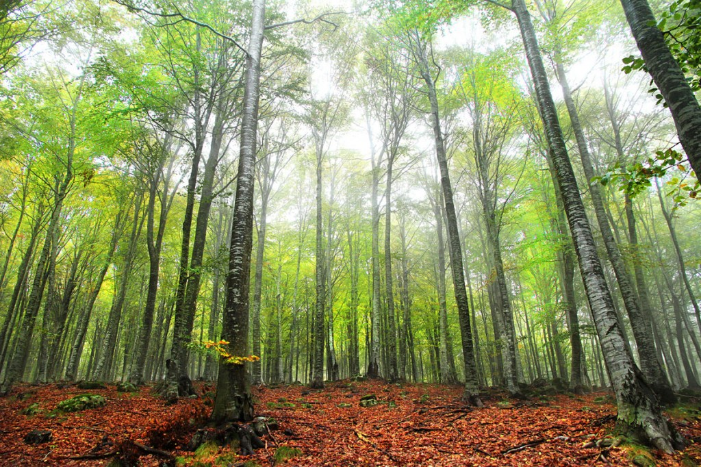 The forests of Monte Amiata