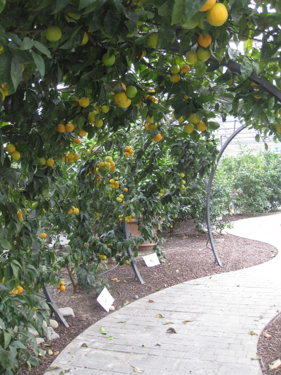 Tintori Citrus Orchards