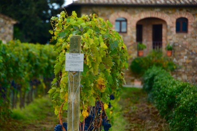Brunello-Vineyards-Tuscany-in-Autumn_wp7_14337.jpg