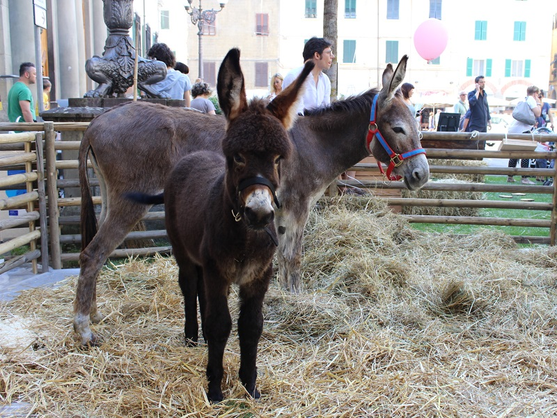 Educational farm in Piazza del Leone, Pistoia [Photo credits: Flavia Cori]