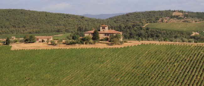 Brolio vineyards