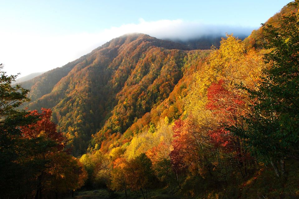 Casentinesi Forests National Park during fall foliage [Photo Credits: Alessandro Cappuccioni]