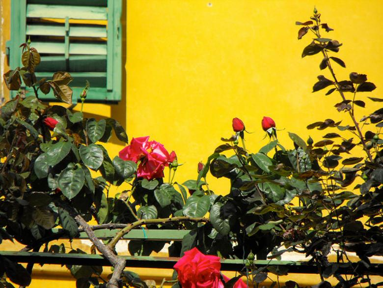 The colors of Florence's gardens