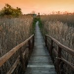 massaciuccoli-path_wp7_15582.jpg