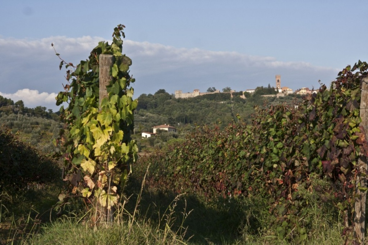 Montecarlo and its vineyards