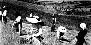 Women at work in the fields around Signa