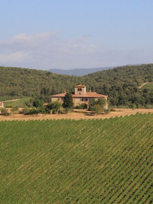 Brolio vineyards, Gaiole in Chianti