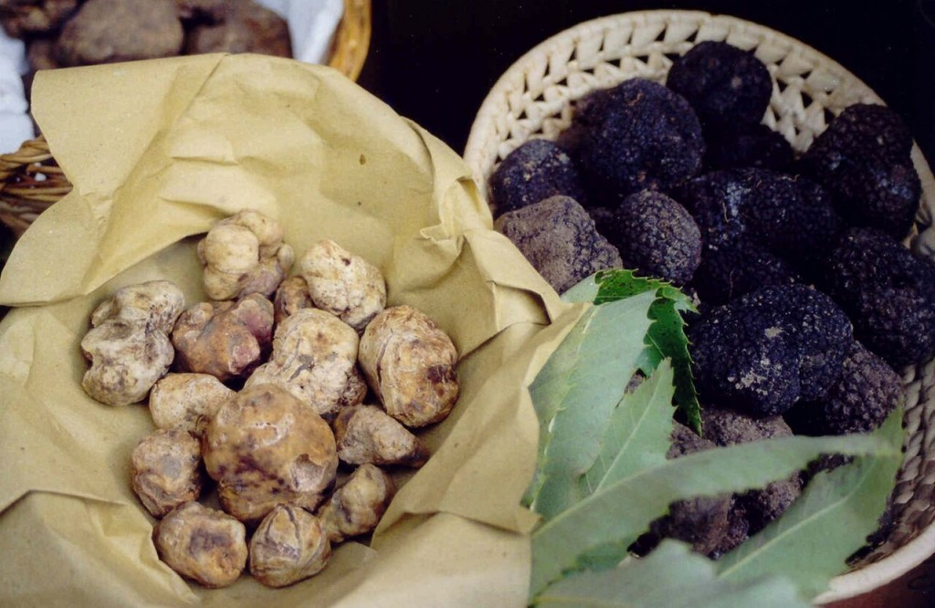 White and black truffles [Photo credits: Mugello Toscana]