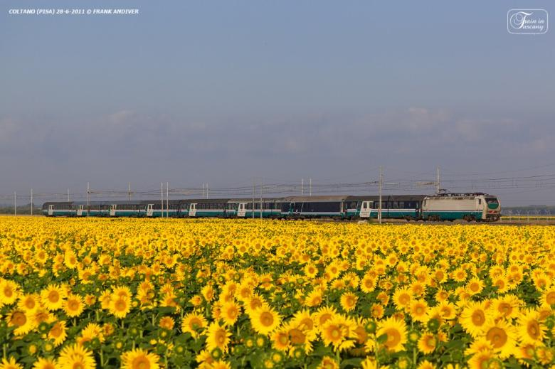 Train pic starring sunflowers in the area of Pisa