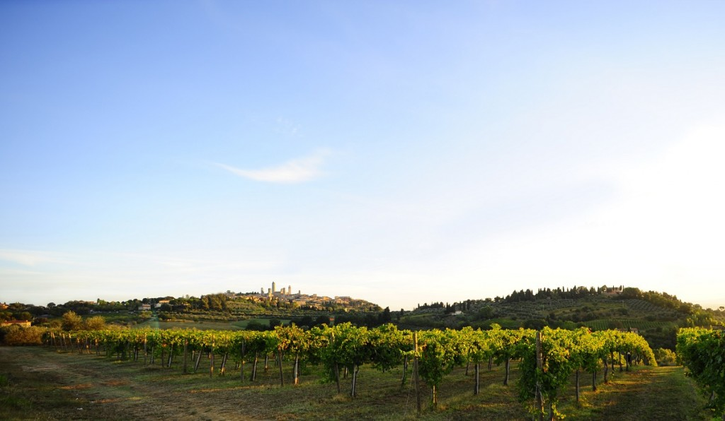 On the Vernaccia di San Gimignano road [Photo credits: Consorzio Vernaccia di San Gimignano]