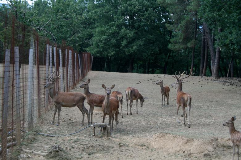 Deers at Zoological Park of European Fauna in Poppi
