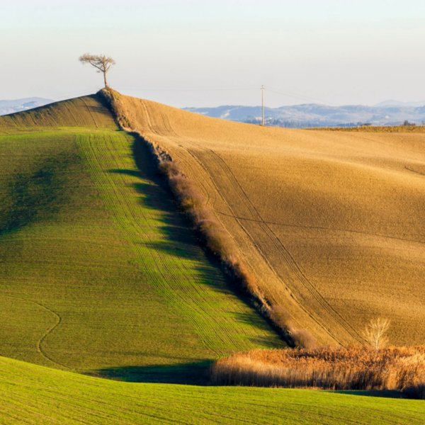 Tuscan landscape in the surroundings of Monteroni d'Arbia