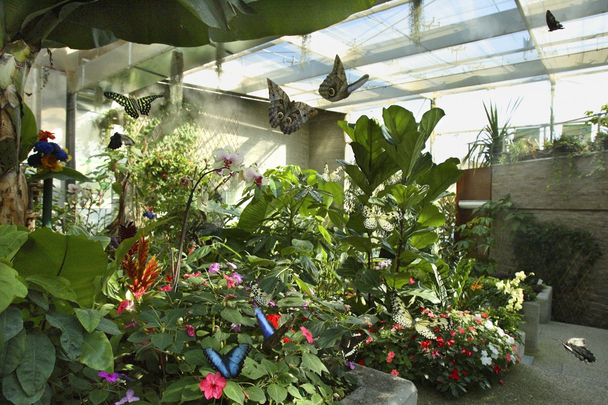 Butterfly House a Collodi
