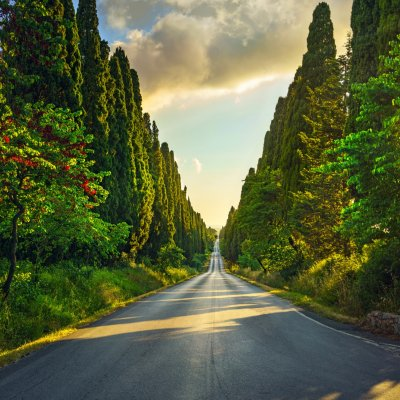 Bolghieri, the road of the cypresses