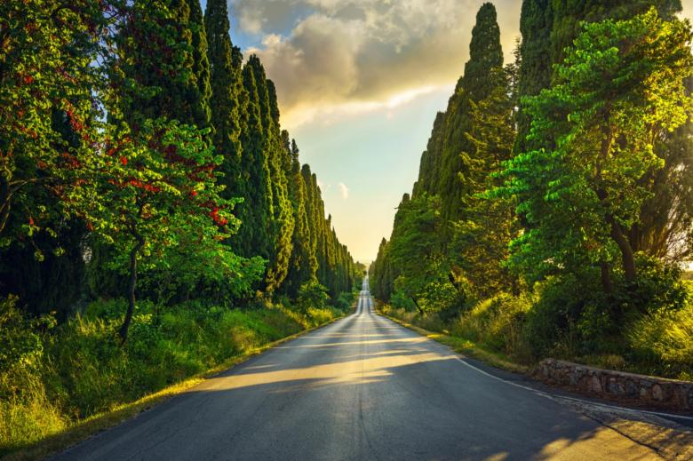 The famous avenue of cypress trees
