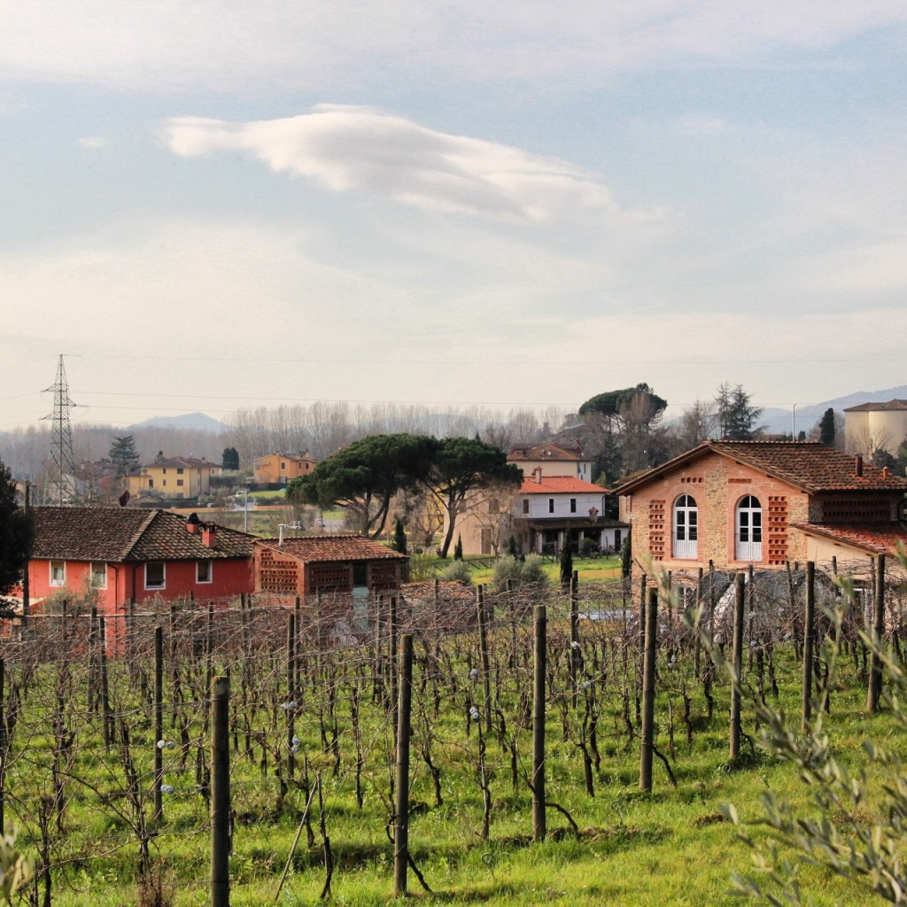 Lucca countryside