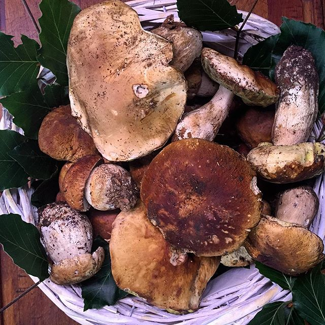 Porcini mushrooms from the Garfagnana [Photo credits: Aurelio Barattini]