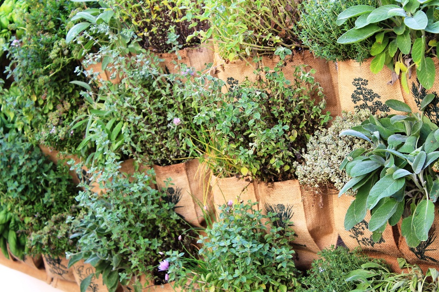 A vertical vegetable garden at Mama's cooking school