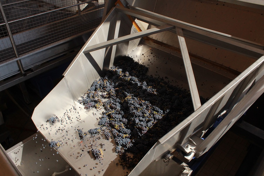 Grapes go through a reception tank into a stemmer, which removes the grapes from the rachis
