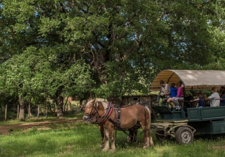 enjoy the maremma park in a horse drawn carriage visit tuscany