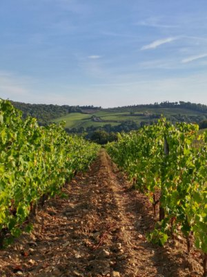 Vineyards Gaiole in Chianti
