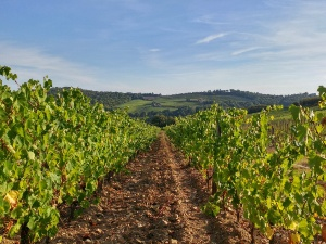 gaiole-wineyards