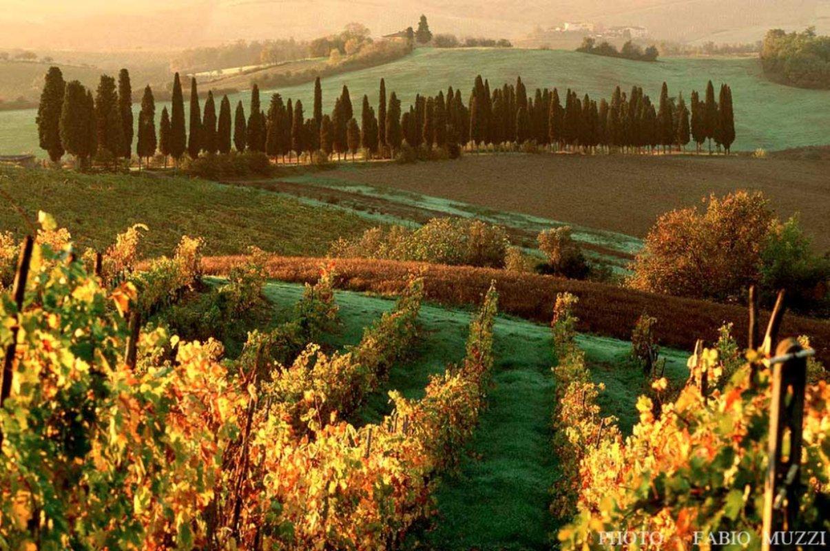 Matrimonio Bosco Toscana : Castagne e funghi a caccia dei sapori d autunno in