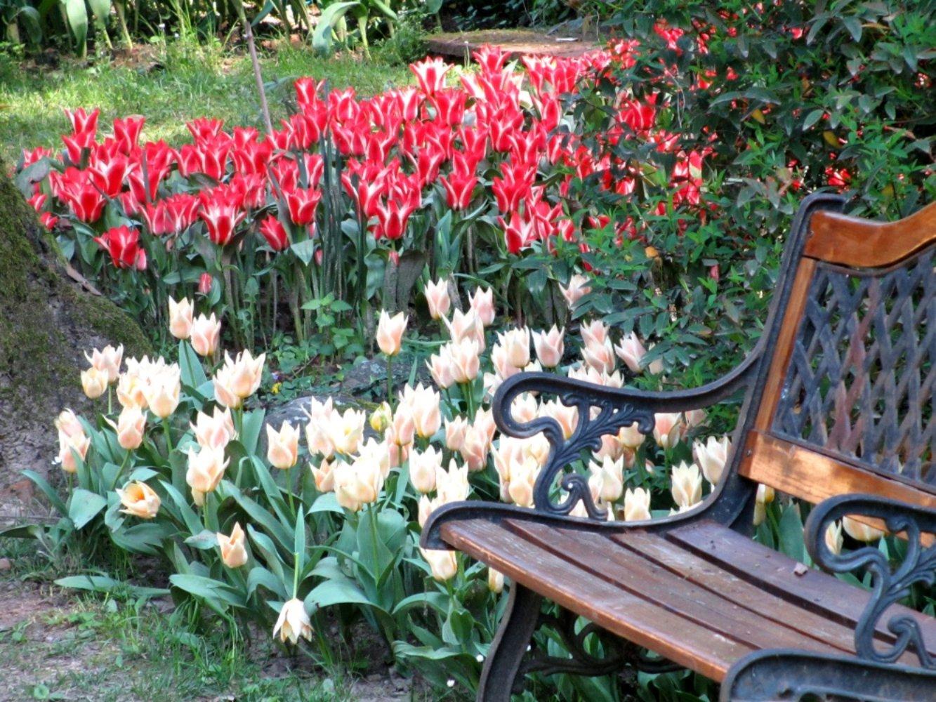 Fiori Da Giardino In Montagna primavera in fiore nei giardini più belli della toscana