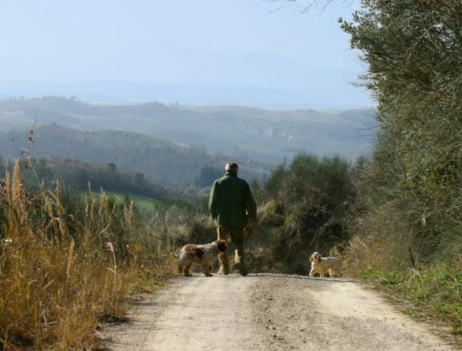 Truffle hunting in San Giovanni d'Asso
